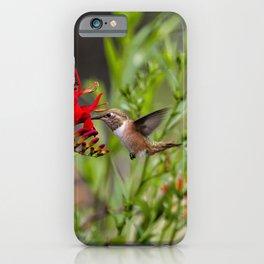 Rufous Hummingbird Feeding, No. 2 iPhone Case