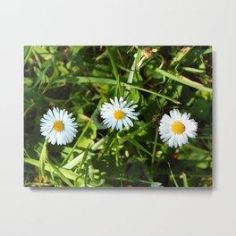 My Three Daisies Metal Print