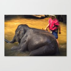 Elephant - Chiang Mai - Thailand Canvas Print