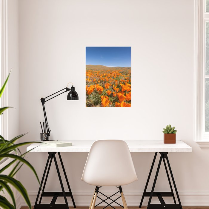 Blooming poppies in Antelope Valley Poppy Reserve Poster