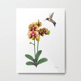 Hummingbird & Phalaenopsis Metal Print