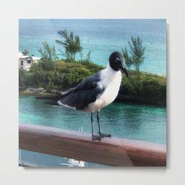 The Pigeon of Nassau Metal Print