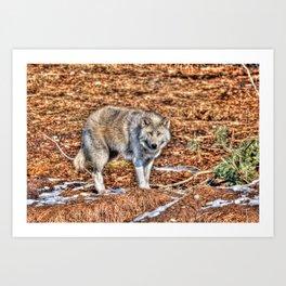 Arctic Wolf and Pine Tundra Art Print