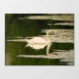 Graceful Swan Canvas Print