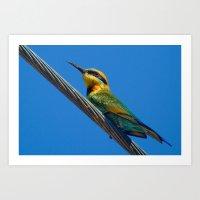Bird on a wire (Rainbow Bee eater) Art Print