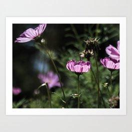 Glowing Petals Art Print