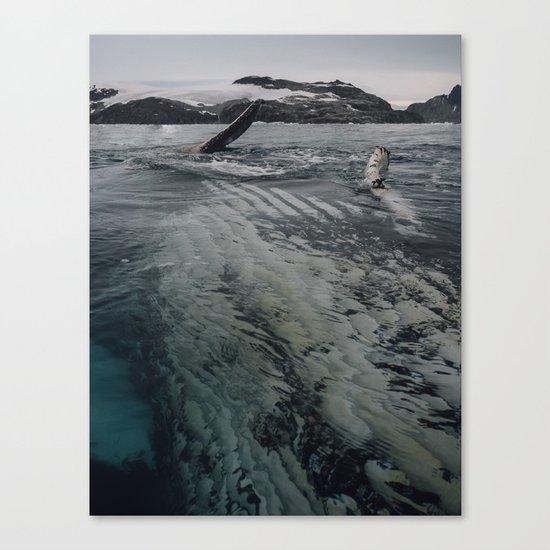 Playful Humpback Canvas Print