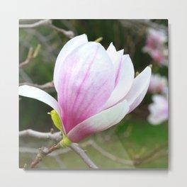 Sweet Magnolia In Springtime Metal Print
