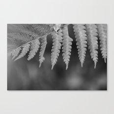 Fern 2 Canvas Print