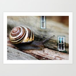 Snail :: Room with a View Art Print