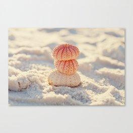 Sea Urchins Canvas Print