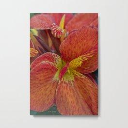 Orange Red Flowers Metal Print