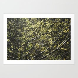 Glowing Branches Art Print