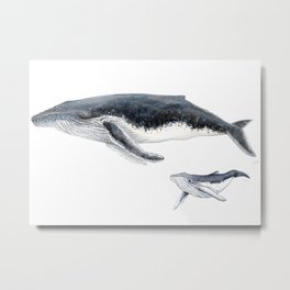 Humpback whale mother and humpback whale baby Metal Print