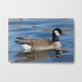 Cackling Goose Metal Print