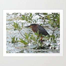 Green Heron at Lakeside Art Print