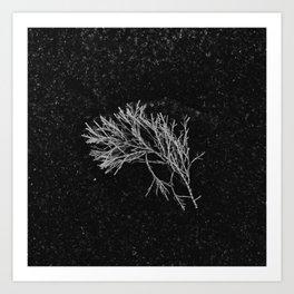 Sea Plant on Sand Art Print