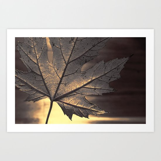 canadian maple leaf Art Print