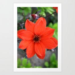 Flower in BC Art Print