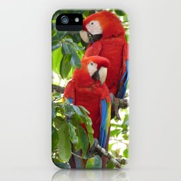Colorful Macaw Couple iPhone Case