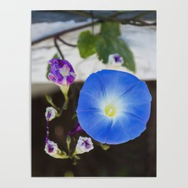 What's the Story, Morning Glory? Poster