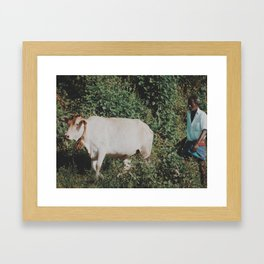 Man and cow  Framed Art Print