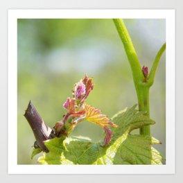 vine shoots Art Print