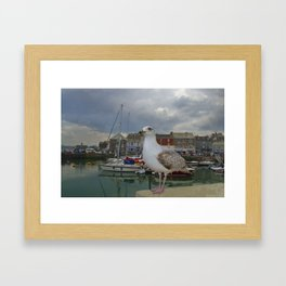 The Padstow Seagull, Padstow, Cornwall, UK Framed Art Print