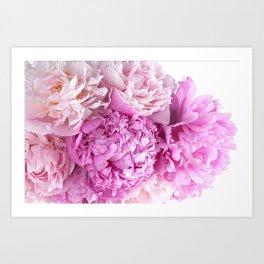Pink Peonies Shabby Chic Cottage Peonies Art Print