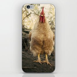 gallo chulo iPhone Skin