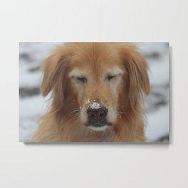 Snowy Pup Metal Print