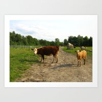 cows Art Prints featuring Cows by Emily Elizabeth Reichmann