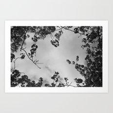 spring black & white Art Print