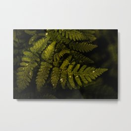 Textured fern leaf Metal Print