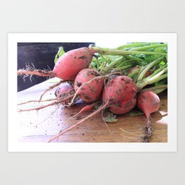 Radishes From The Garden   Art Print