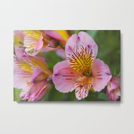 Pink and yellow flora Metal Print