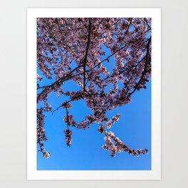 South Portland Spring 2018 (1) Art Print