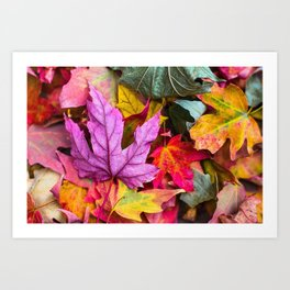 Indian Summer 4 Art Print