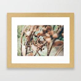 Gumtree Framed Art Print