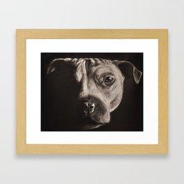 PitBull Framed Art Print