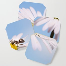 Ant On A Flower Coaster