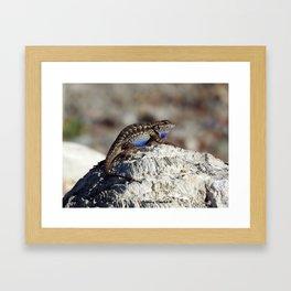 Western Fence Lizard Framed Art Print