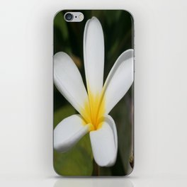A Single Plumeria Flower Macro  iPhone Skin