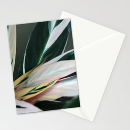 tropic of palm 6382 Stationery Cards