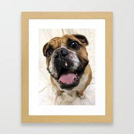 "English Bulldog ""Jughead"" Framed Art Print"