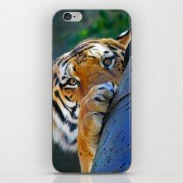 Playful Amur Tiger iPhone Skin