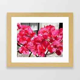 Hot Pink Bougainvillea Framed Art Print