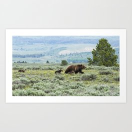 Heading South, No. 2 - Grizzly 399 and Cubs Art Print