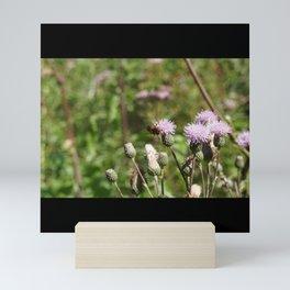 Bee On A Field Of Thistle Mini Art Print