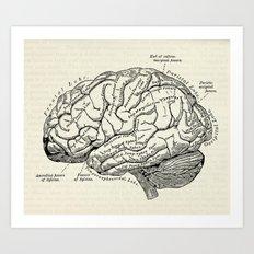 Vintage medical illustration of the human brain Art Print